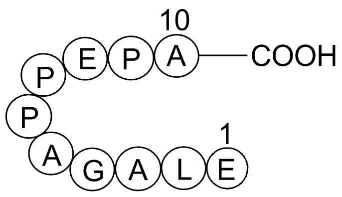 Beta-Lipotropin (1-10), porcine