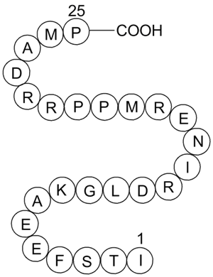 Calcineurin Autoinhibitory Peptide